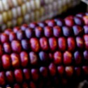 Food Focus: Blue Corn