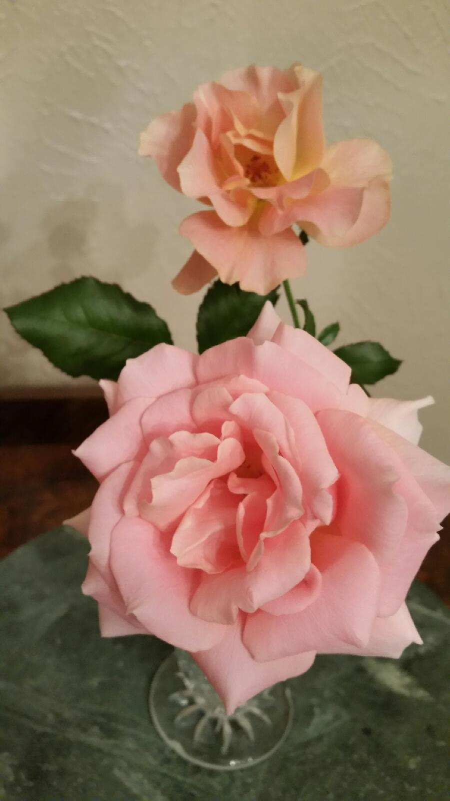 Ida's fragrant Rose